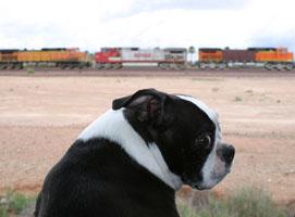 P-dog wishing she were anywhere but Beardsley