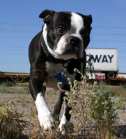 P-dog at Lizard Acres